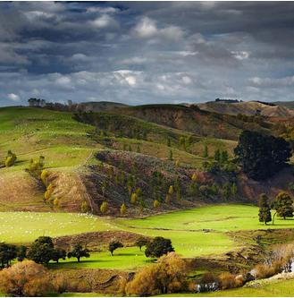2017 Technology Sector Data for Wellington, New Zealand
